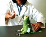 Veterinario Ambulatorio h24 Dott. Piero Faravelli