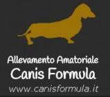 Canis Formula Kennel - Allevamento Amatoriale Canis Formula Bassotto standard, nano, kaninchen pelo corto