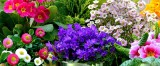 Flower Design D'ambrosio
